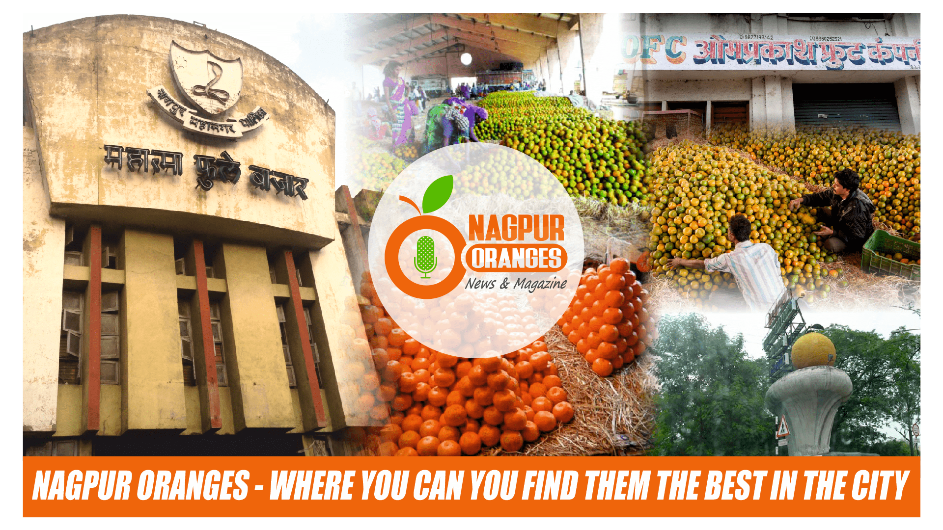 Photo of Nagpur Oranges – Where You Can You Find them the Best in the City