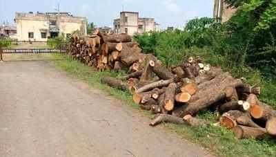 trees cut bhandara