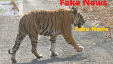 Photo of Fake News: Tiger in Gorewada Proved out to be a Hoax