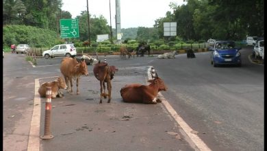 Photo of Increasing Stray Animals in City Creating Fresh Troubles